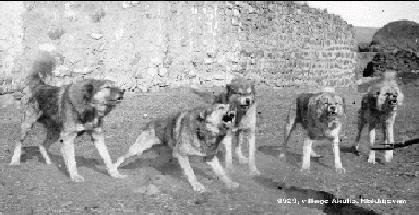 Amitriptyline For Dogs Uk